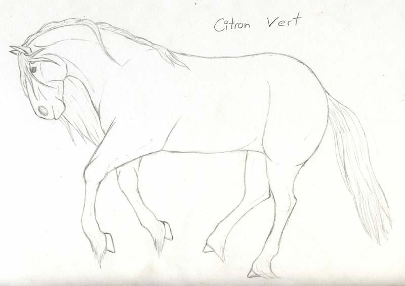 Un cheval au galop il devrait etre pas mal en gris souris - Comment dessiner un cheval au galop ...